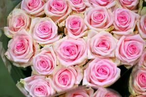 Rosa Sweet Dolomiti