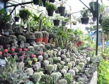 Sunflowertime Viveiros - Plantas