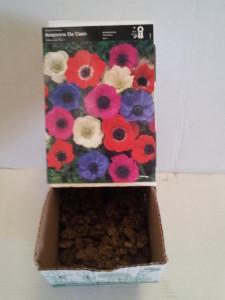 Anemona singela caixa de gaveta c/ 150