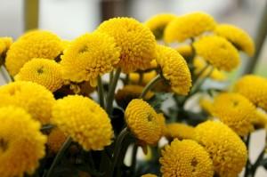 Margarida Feeling Yellow