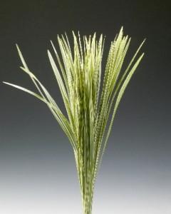 T-Grass Bicolor