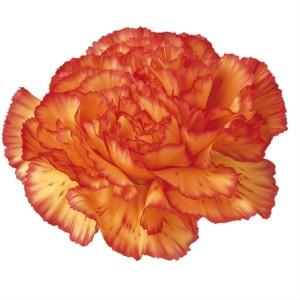 Amarelo matizado laranja