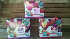 Bolbos Holanda Tulipa Caixas com 100 bolbos, cada cx com 3 cores diferentes